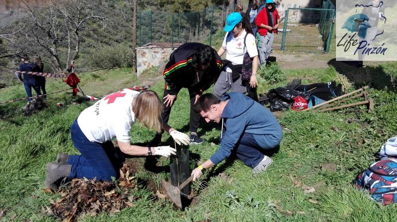 Turistas nos ayudan a plantar orientados por voluntario de Cruz Roja