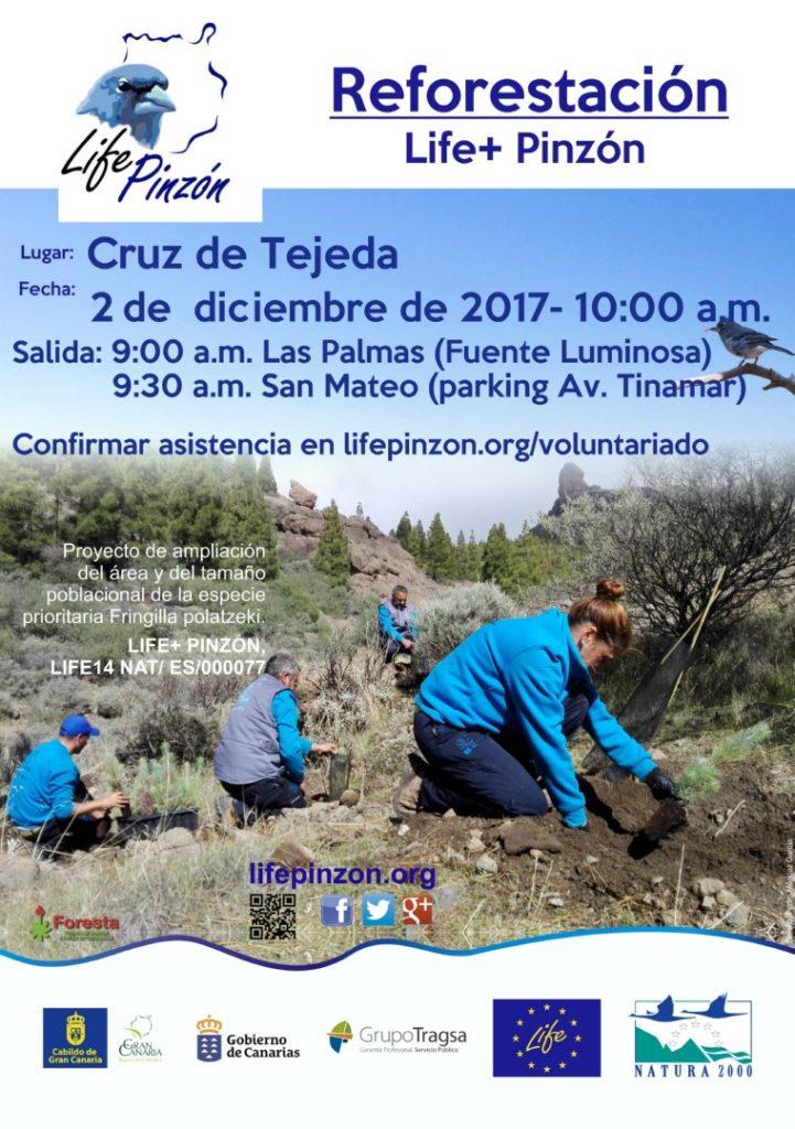 Última actividad de voluntariado de repoblación de 2017 @ Cruz de Tejeda