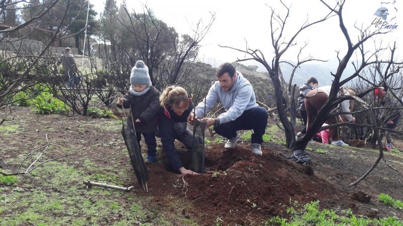 3-Reforestacion-con-voluntarios-del-proyecto-LIFE-Pinzon-MARZO-2018
