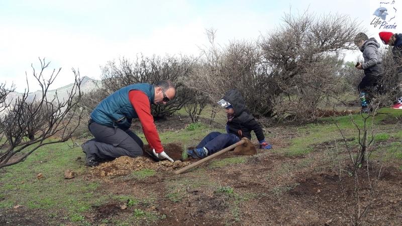 4-Reforestacion-con-voluntarios-del-proyecto-LIFE-Pinzon-MARZO-2018