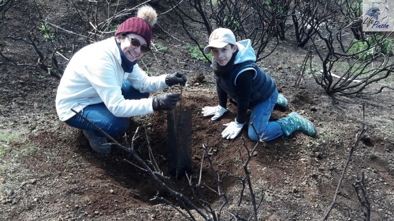 6-Reforestacion-con-voluntarios-del-proyecto-LIFE-Pinzon-MARZO-2018