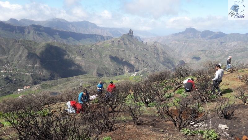 7-Reforestacion-con-voluntarios-del-proyecto-LIFE-Pinzon-MARZO-2018