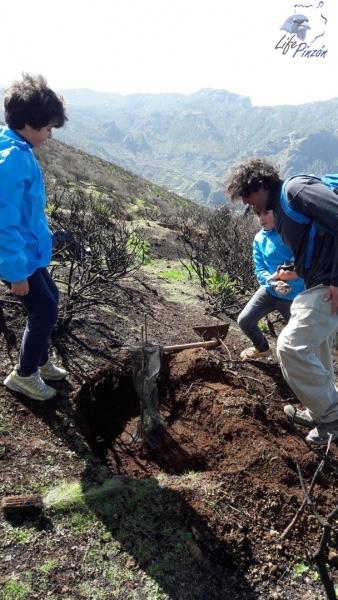 8-Reforestacion-con-voluntarios-del-proyecto-LIFE-Pinzon-MARZO-2018