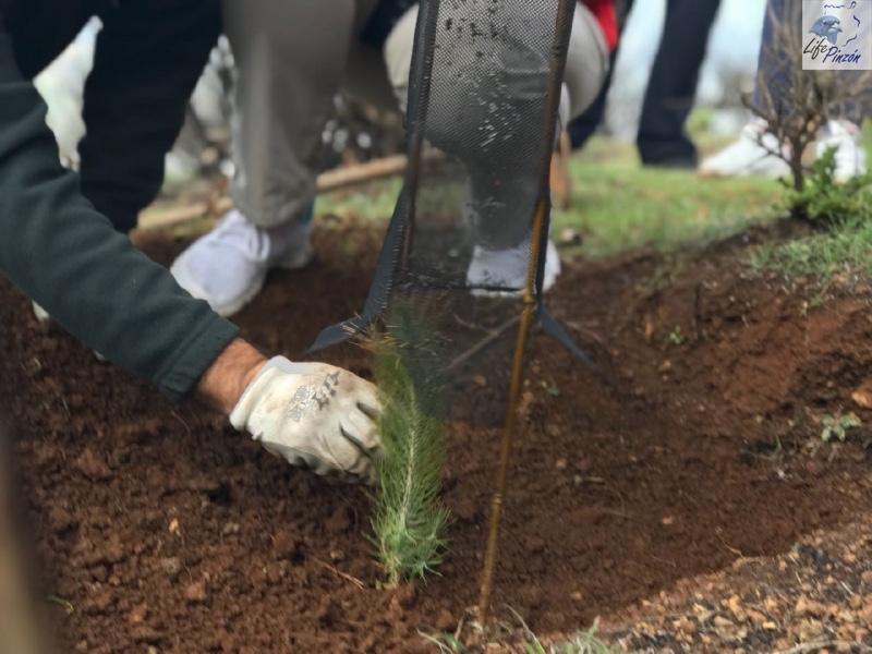 9-Reforestacion-con-voluntarios-del-proyecto-LIFE-Pinzon-MARZO-2018