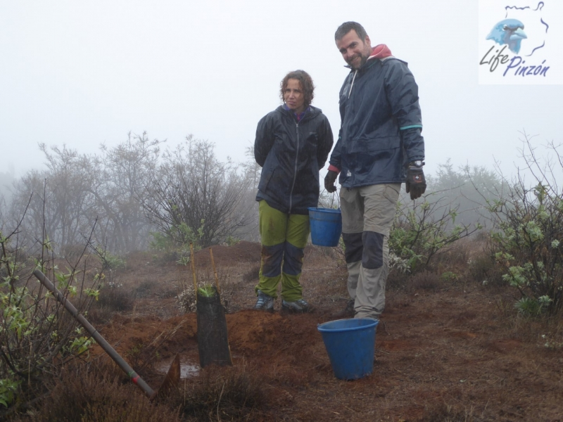 6-reforestacion-lifepinzon-2017