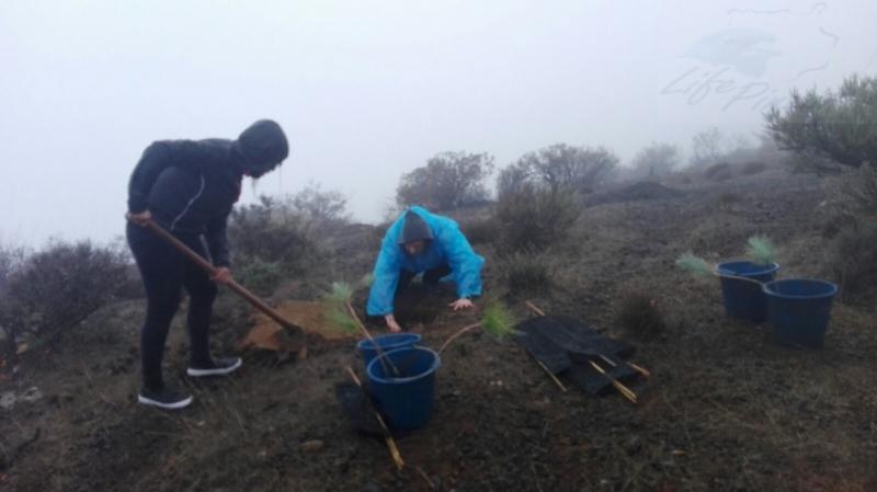 6b-reforestacion-04-11-2017-life-pinzon