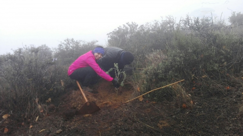 6e-reforestacion-04-11-2017-life-pinzon