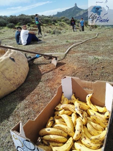 Reforestacion-con-alumnos-del-IES-Vega-de-San-Mateo6