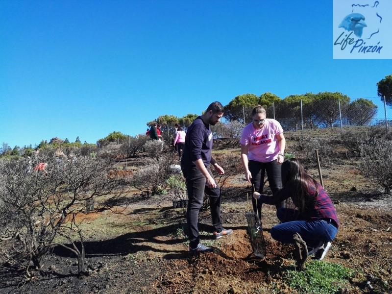 Reforestación-en-la-Cumbre-con-el-IES-San-Cristóbal-1