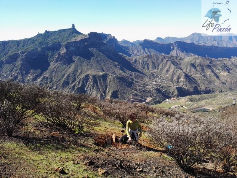 Reforestación-en-la-Cumbre-con-el-IES-San-Cristóbal-3