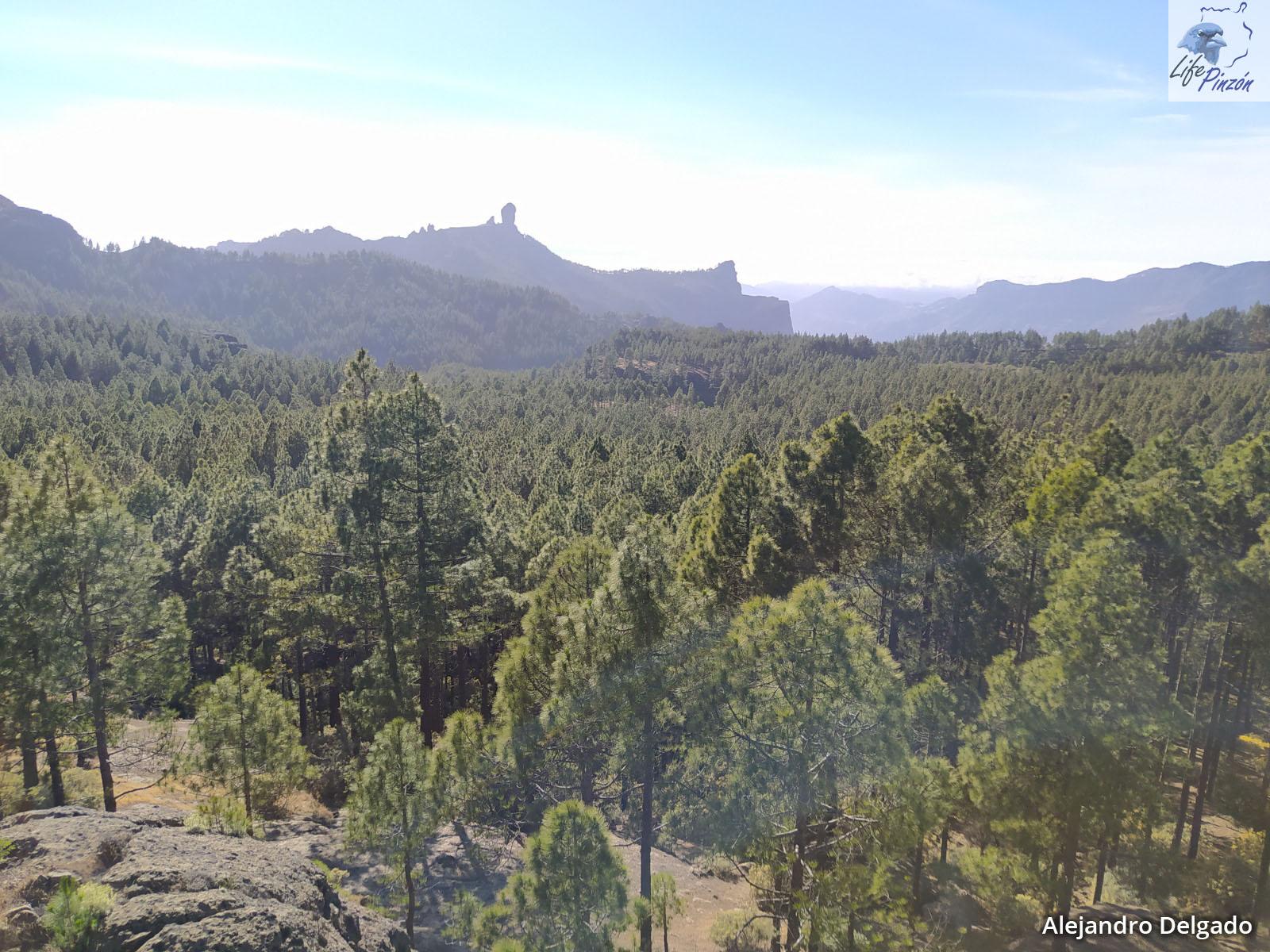 3. Vistas generales del entorno de los pinares de La Cumbre (©A. Delgado-SEOBirdLife)