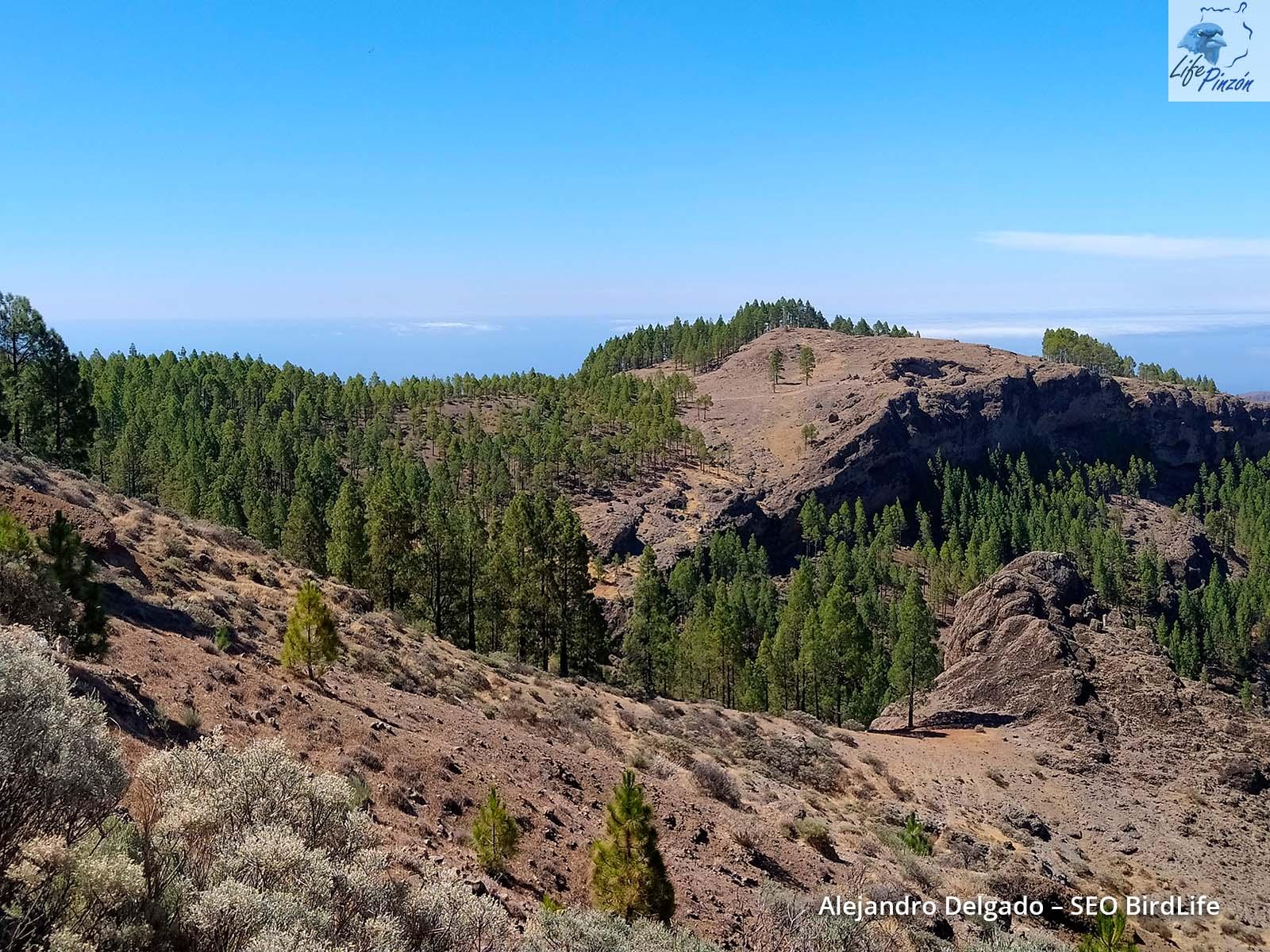 Foto 36_Territorio de la pareja de la Ventana del Nublo (©A. Delgado-SEOBirdLife)